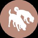 hundeschule-schnueffelnase.com