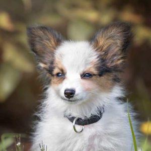 Welpen und Junghunde